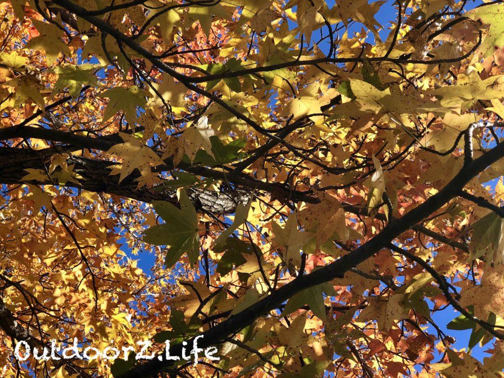 Outdoorzlife, Autumn, Foliage, Leaves