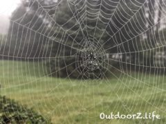 Outdoorzlife, Spider Web