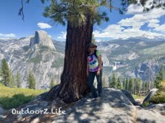 A picture of the tree where we took at lunch break at Glacier Point, Yosemite National Park.