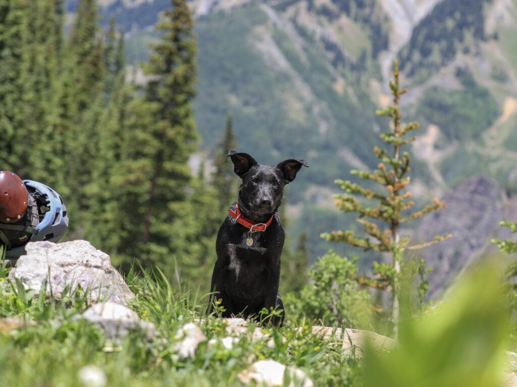 Dog on a hiking trail