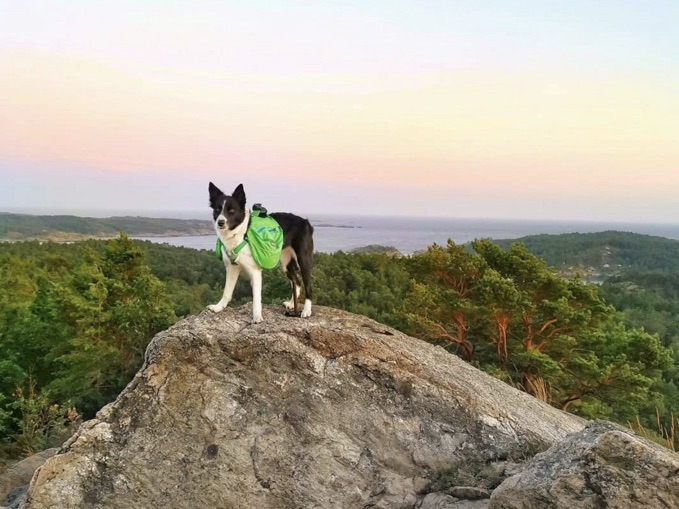 Hiking packs for dogs