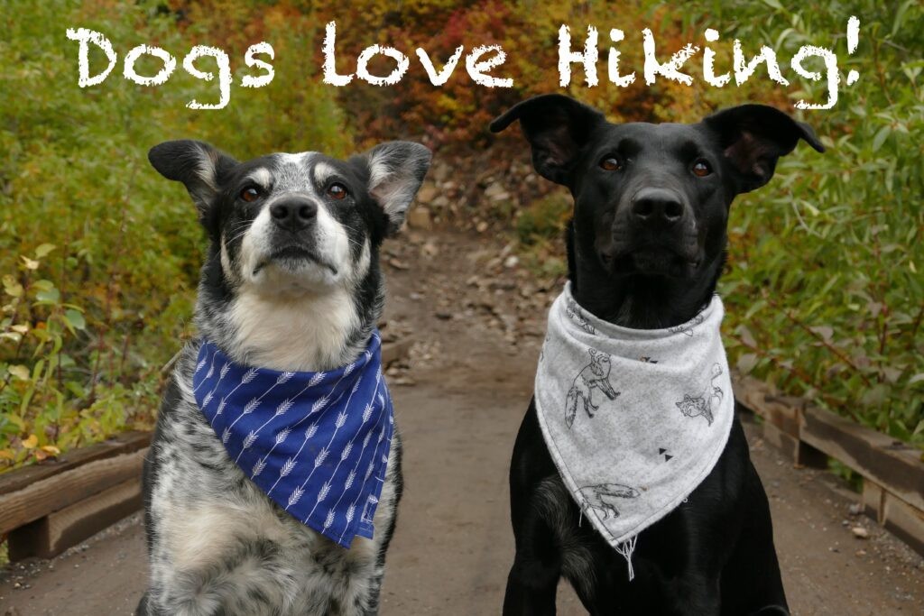 Dogs love hiking