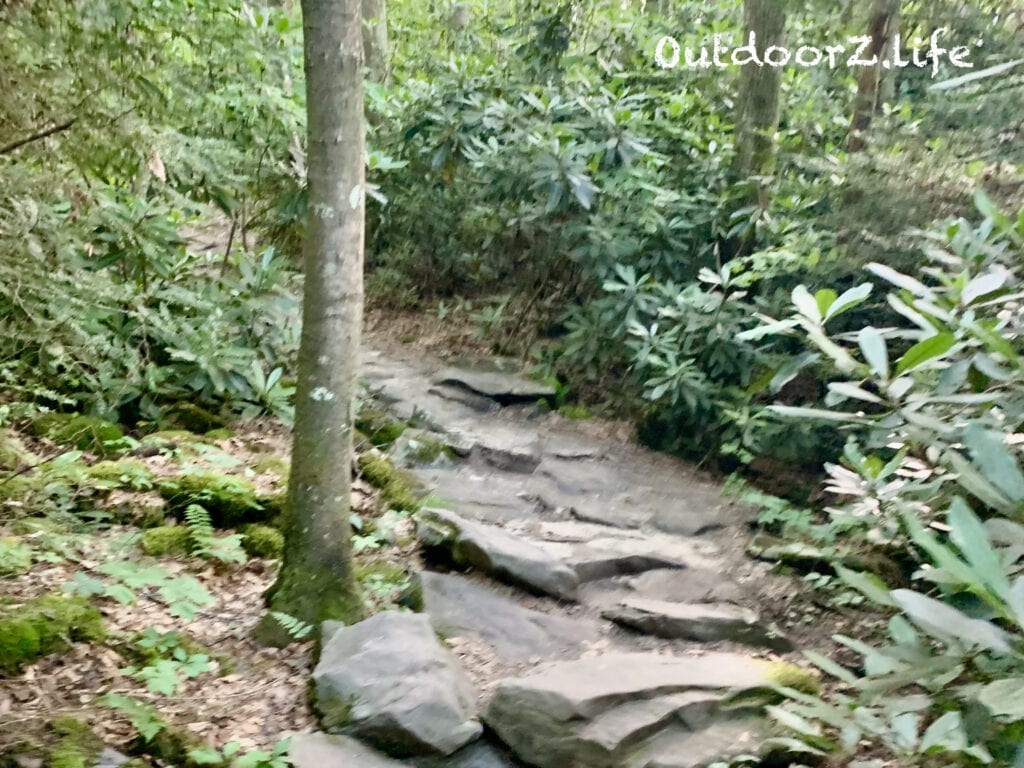 Rocks and Rhododendrons on the trail